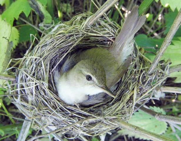 Сообразительная птичка
