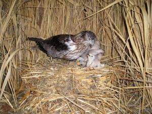 Гнездо птицы