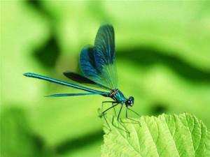 Взрослое насекомое