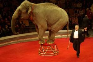 Директор цирка