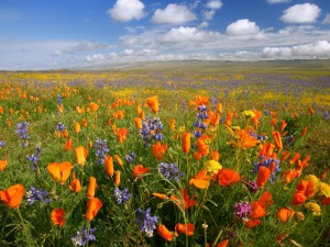 Красивые цветники