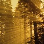 Брянские леса
