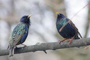 Насекомоядные птицы