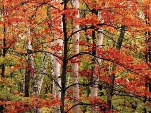 Полезащитные лесные полосы