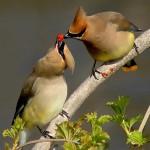 Птицы в лесу