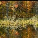 Боровое озеро