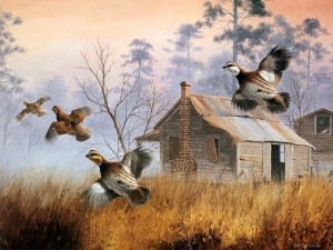 Выводковые птицы