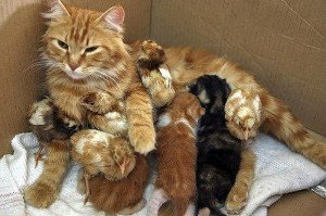 Необычная семейка