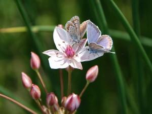 Насекомые бабочки