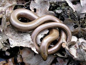 Ящерицы и змеи