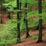 В лесах