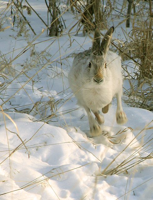 Странный заяц (9 фото)
