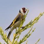 Значение птиц