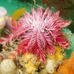 Морские черви