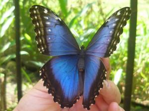 На вес золота, фонарный столб, крылья бабочки, яркие звезды, бабочка морфо
