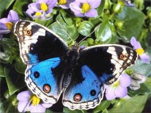 Яркие цветы, фонарный столб, крылья бабочки, бабочка морфо, на вес золота