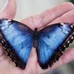 Бабочка морфо, фонарный столб, крылья бабочки, яркие цветы, на вес золота