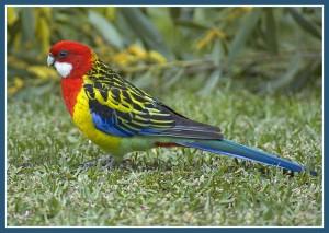 В зоопарке, виды попугаев, растительноядные птицы, в домашней обстановке, маленькие домики