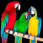 Виды попугаев, растительноядные птицы, в домашней обстановке, маленькие домики, в зоопарке