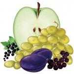 Суточная норма, сорта яблок, дубильные вещества, белая смородина, листовая капуста, работоспособность человека