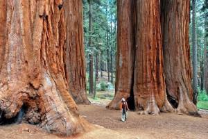 Из дерева, лесники, интересные деревья, лесоводы, молодые побеги