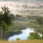 Река Березина, дикие утки, за рекой, стройные березки