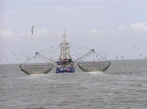 Промысел, улов, траловый флот, естественная убыль, мелкая рыба, сопротивление воды