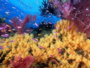 Естественная убыль, улов, промысел, траловый флот, мелкая рыба, сопротивление воды