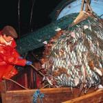 Улов, промысел, траловый флот, естественная убыль, мелкая рыба, сопротивление воды