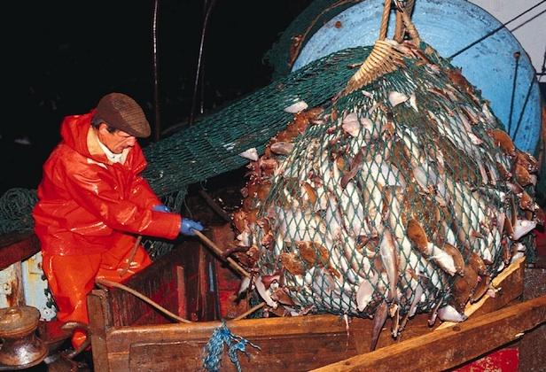 как получить разрешение на ловлю рыбы сетями в архангельске