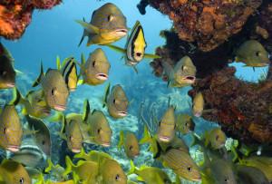 Морские рыбы, сайра, килька, рыбопродуктивность, рыбный промысел