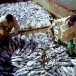 Рыбный промысел, сайра, килька, морские рыбы, рыбопродуктивность