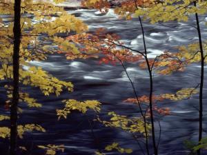 Течение реки