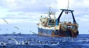 Морские птицы, математическая модель, рыбный порт, естественная убыль, вылов рыбы