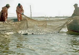Вылов рыбы, математическая модель, рыбный порт, морские птицы, естественная убыль