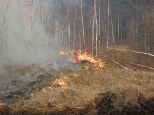 Лесной пожар, имя человека, юные натуралисты, привлекательный вид