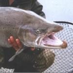 Рыба глубоководная