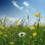 Кормовая трава