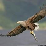 Питание птиц