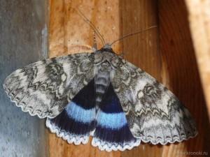 Крупная бабочка