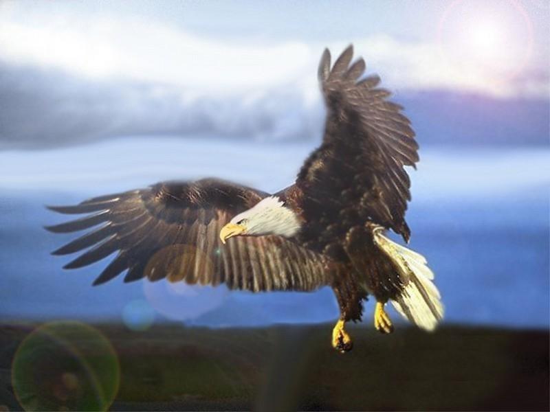 заход самая крупная хишняя птица монолитные