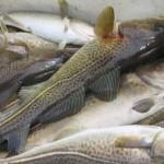 Названия рыб