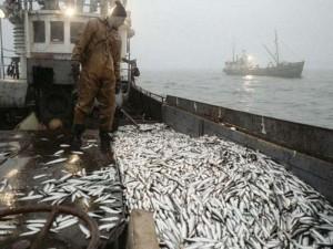 Ловить рыбу