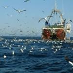 Промысел рыбы