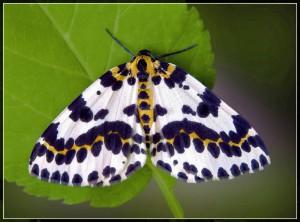 Бабочки насекомые