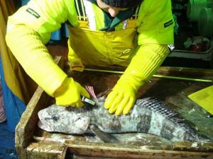 Изучение рыб