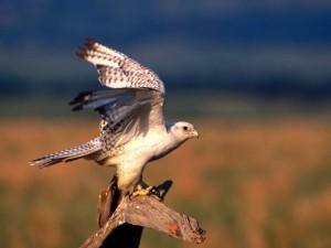 Роль птиц