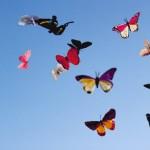 Названия бабочек