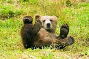 Маленький медвежонок