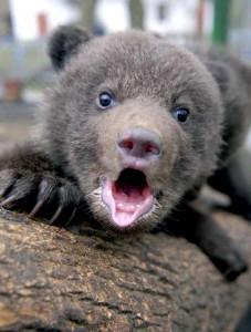 Медвежонок маленький